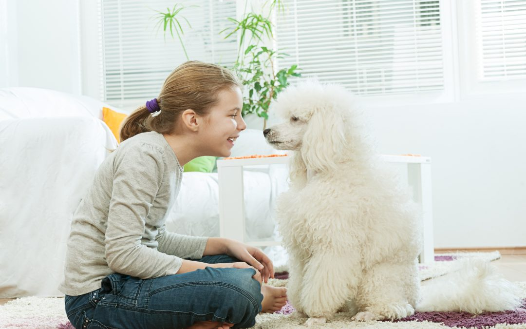 6 Consejos para proteger a tu cachorro de tu casa