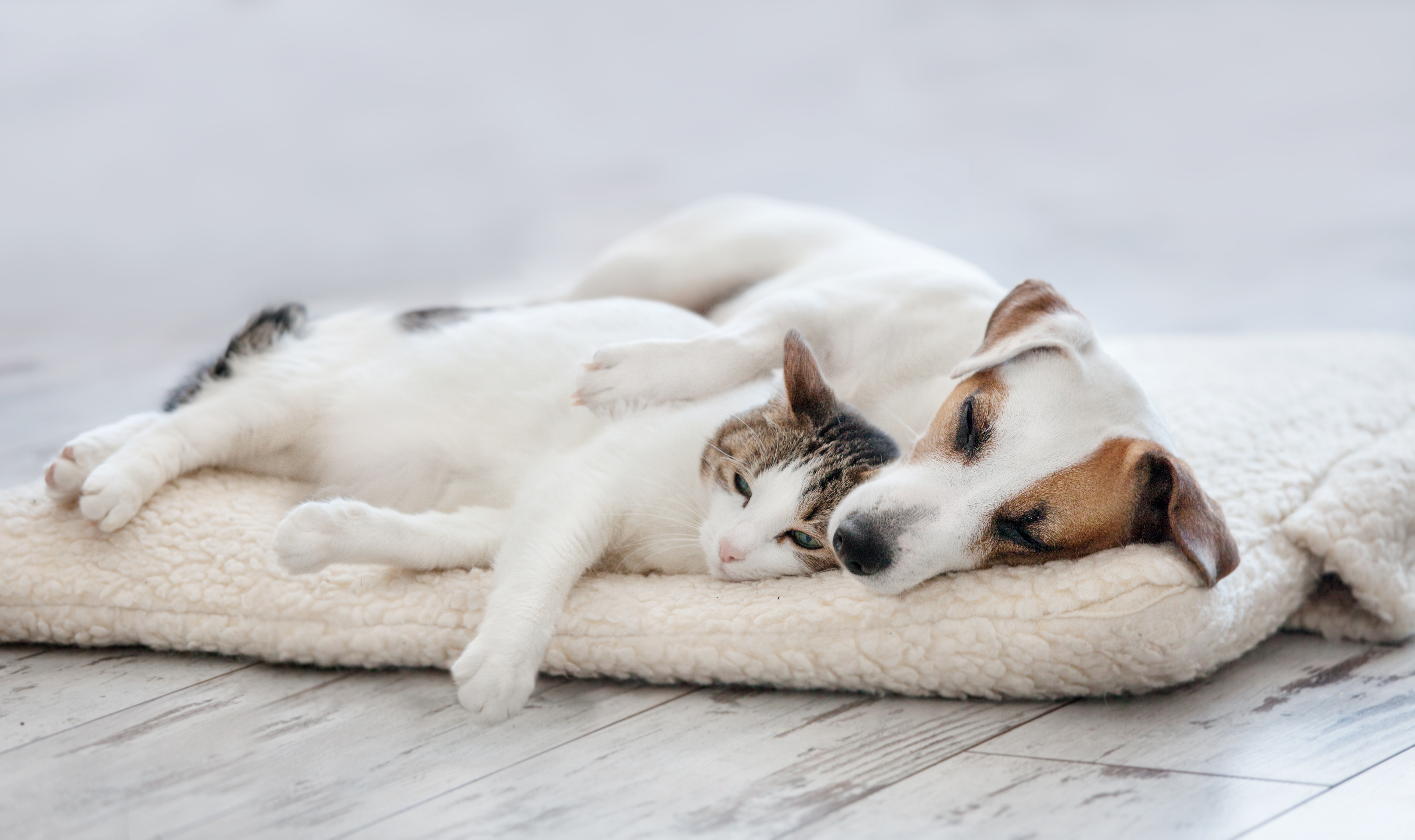Cómo ser buen vecino con mascotas