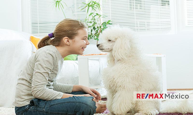 Consejos para proteger a tu cachorro de tu casa_WP_ventas_comprar_rentar_vender_casa_departamento_franquicias_inmobiliarias_REMAX_mexico_propiedades_comerciales_terrenos_bodegas